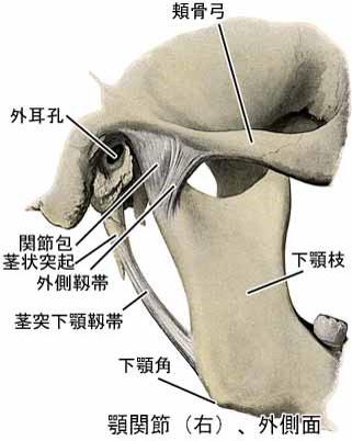 あごの関節(顎関節)